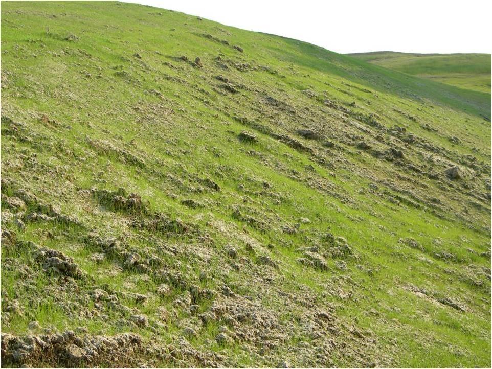 Hydrosiew - ochrona przed erozją powierzchniową